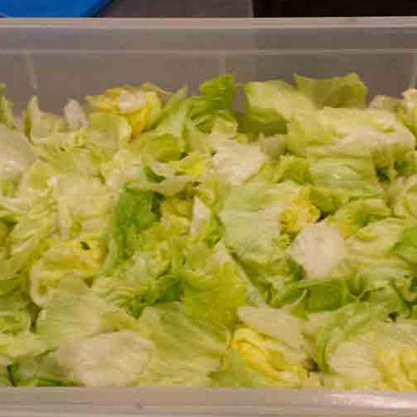 insalata-iceberg